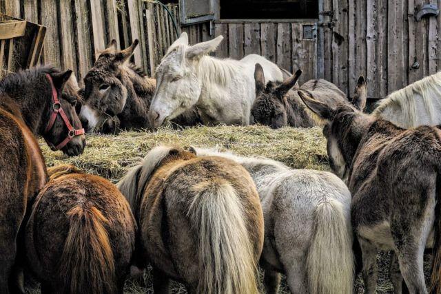 Devenir soigneur animalier dans un zoo : ce qu'il faut savoir