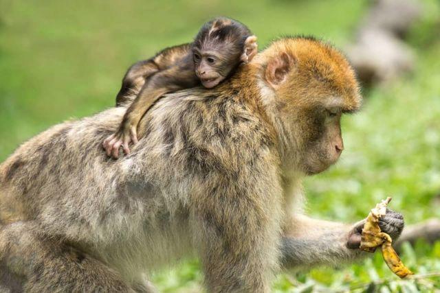 soigneur animalier dans un zoo