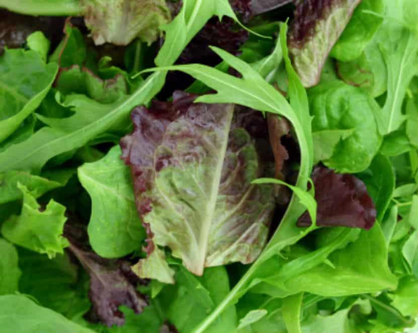Les légumes à feuilles vert foncé