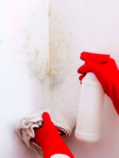 Remèdes naturels pour nettoyer les moisissures