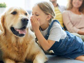 Education du chien en famille